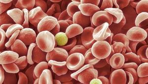 Course__courses_auxophysiology__course-promo-image-1433506793.94