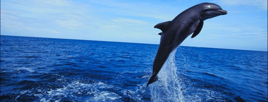 learning about dolphins on